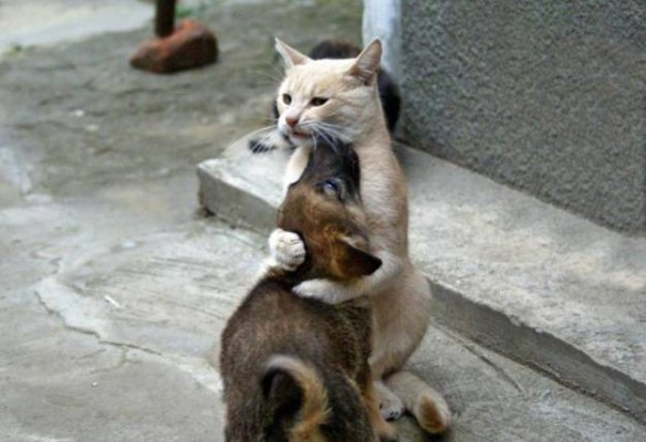 The hug: gatophoto.com